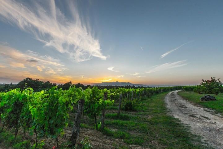 vines-428050_1280